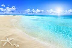 在晴朗的海滩的壳 免版税库存图片