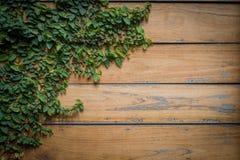 在板条木头纹理的绿色叶子 免版税库存照片