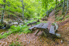 木木材长凳在雨林里 免版税库存照片