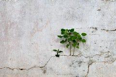 παλαιός τοίχος σύστασης Στοκ εικόνες με δικαίωμα ελεύθερης χρήσης