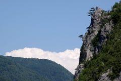与杉树的山风景在岩石 库存照片