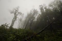 在风暴以后的下落的树在有雾的森林里 免版税库存照片