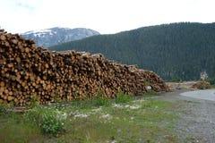 砍伐森林在加拿大 免版税库存图片