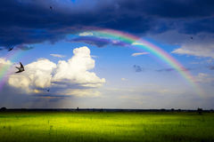 艺术自然夏天全景在雨以后的 库存照片