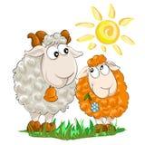 两只滑稽的羊羔 免版税图库摄影