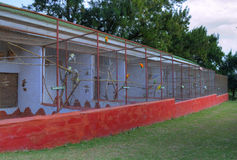 鸟笼充满各种各样的热带鸟 免版税库存照片