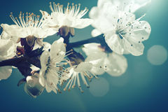 花卉老牌背景 库存照片