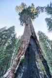 综合财政补贴美国加州红杉树,国王峡谷国家公园 库存照片