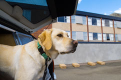 嗅探犬狗 库存图片