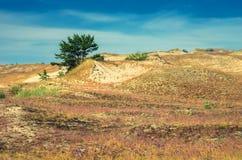 沙丘在立陶宛 库存照片