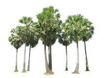 九桄榔树 免版税图库摄影