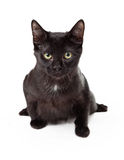Серьезный черный котенок внутри атакует позицию Стоковое Изображение
