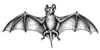 Кричащая летучая мышь Стоковые Изображения
