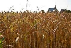 пшеница лета поля дня горячая Стоковые Фото