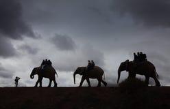 被引导的大象乘驾 免版税库存照片