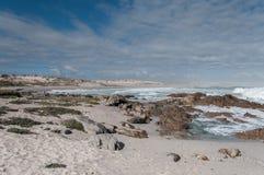 与碎波的海滩 库存照片