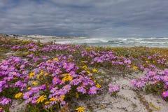 在沙丘的紫色花 免版税库存照片