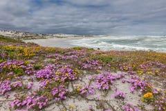 对海滩的桃红色花网 免版税库存照片
