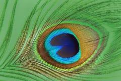 关闭五颜六色的孔雀羽毛 免版税库存照片