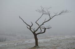 中断的结构树 库存图片