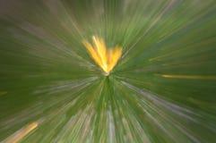 抽象自然背景徒升 免版税库存照片