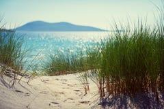 与沙丘、高草和蓝天的晴朗的海滩 免版税库存照片