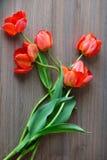 红色郁金香花花束 库存图片