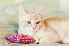 Γάτα με το κόκκινο μαξιλάρι Στοκ εικόνα με δικαίωμα ελεύθερης χρήσης