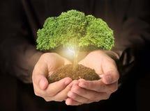 Бизнесмен держа пускать ростии дерева Стоковые Изображения