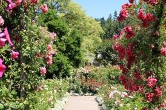 足迹在庭院里 库存图片