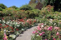 足迹在庭院里 免版税库存照片