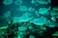 珊瑚礁、热带鱼和海洋生活在加勒比海 免版税库存照片
