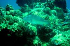 珊瑚礁、热带鱼和海洋生活在加勒比海 库存图片