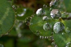 Падения на листьях Стоковые Изображения RF