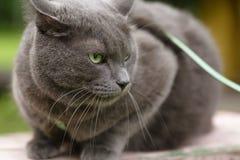 保卫他的疆土的恼怒的猫 库存图片