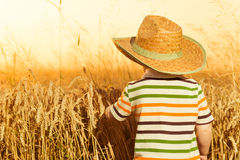 帽子的男孩在夏天麦子 免版税库存照片