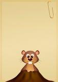 土拨鼠在小室 库存照片