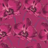 与桃红色兰花的无缝的样式 设计要素开花纹理 库存图片