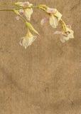 сбор винограда радужек бумажный Стоковое фото RF