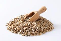 Сырцовые семена подсолнуха Стоковое Изображение