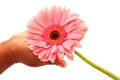 花现有量粉红色 库存图片