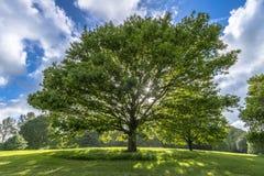 在小山的美丽的树在春天 免版税库存照片