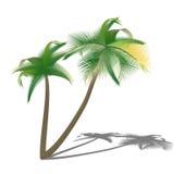 Изолированные пальмы с тенью Стоковая Фотография