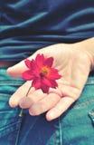 Κόκκινο λουλούδι που κρύβεται πίσω από μια εκλεκτής ποιότητας διάθεση εικόνων Στοκ εικόνες με δικαίωμα ελεύθερης χρήσης