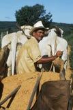 巴西东北部的农民,巴西 库存图片