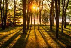 日出通过横跨一个有薄雾的湖的树 图库摄影