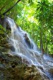 牙买加 小的瀑布在密林 库存照片