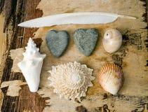 коллаж морской Стоковое Изображение