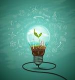 绿色幼木在电灯泡生态里 库存图片