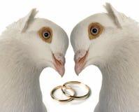 γάμος περιστεριών Στοκ Φωτογραφίες